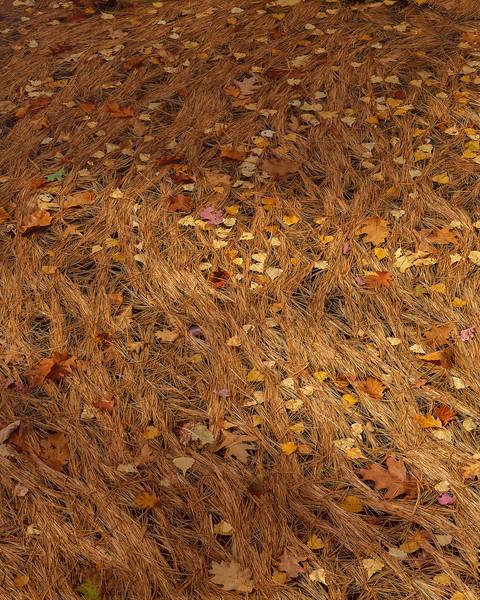 Floating Pine Needles & Leaves