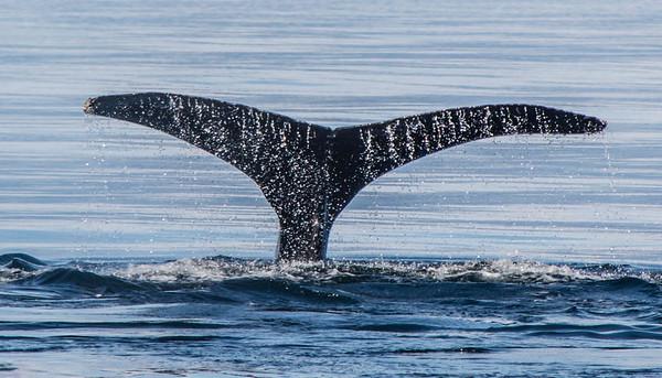 Dyke_Linda_Whales Away
