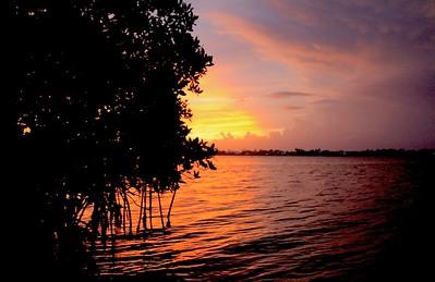 Sammartino_Luke_ Mangrove Sunset 8
