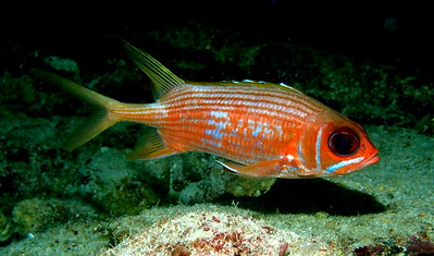 Bartoszek_Joe_SquirrelFish