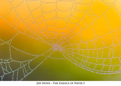Dew covered spider web; Sebastian Conservation Area; Sebastian, Florida