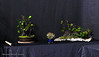 19  Sea Grape display - Exhibit 2017