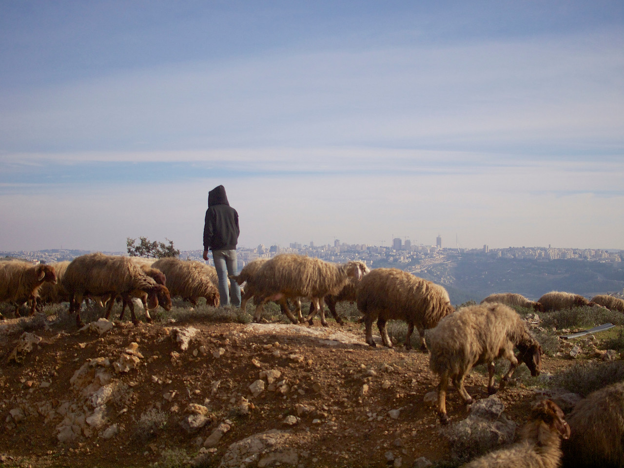 One time I was on the old way of Modiin back to Jerusalem I stopped in a secret place next to the road I know, watching the sheeps passing by, saying hello to the shepherd after taking this.