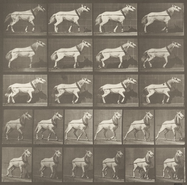 Horse Johnson hauling (Animal Locomotion, 1887, plate 572)