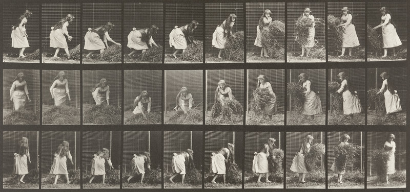 Draped woman lifting handfuls of hay, turning and throwing it down (Animal Locomotion, 1887, plate 458)