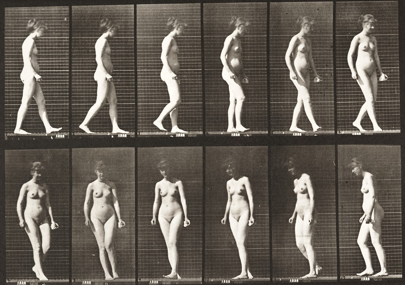 Nude woman walking and turning around (Animal Locomotion, 1887, plate 47)
