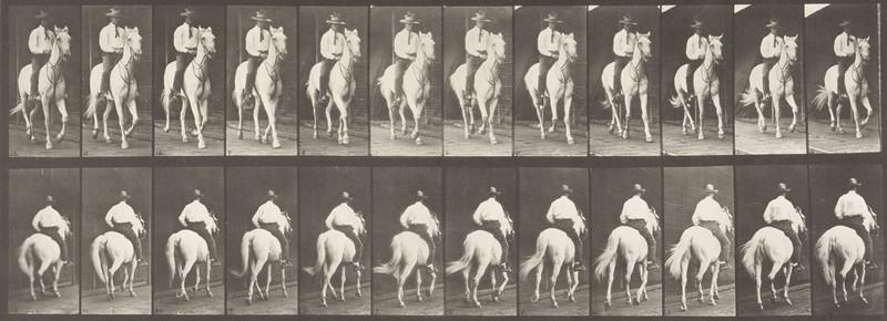 Horse Elberon trotting, saddled with rider (Animal Locomotion, 1887, plate 604)
