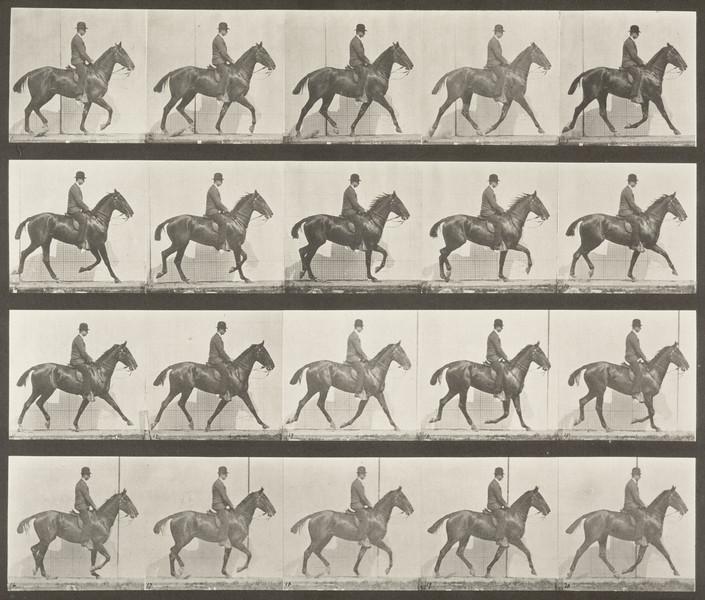 Horse Daisy trotting, saddled with rider (Animal Locomotion, 1887, plate 598)