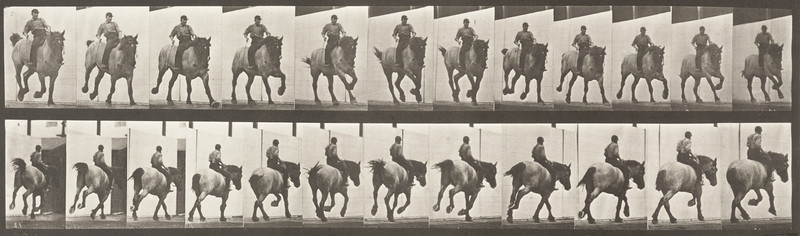 Horse Hansel galloping, bareback with rider (Animal Locomotion, 1887, plate 629)