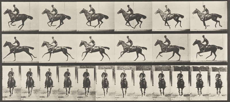 Horse Bouquet galloping, saddled with rider (Animal Locomotion, 1887, plate 632)