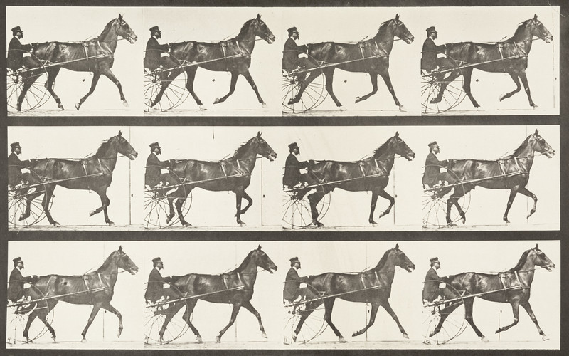 Horse Reuben trotting, harnessed to sulky with driver (Animal Locomotion, 1887, plate 605)