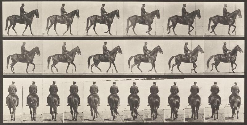 Horse Beauty walking with saddle back rider, irregular (Animal Locomotion, 1887, plate 584)