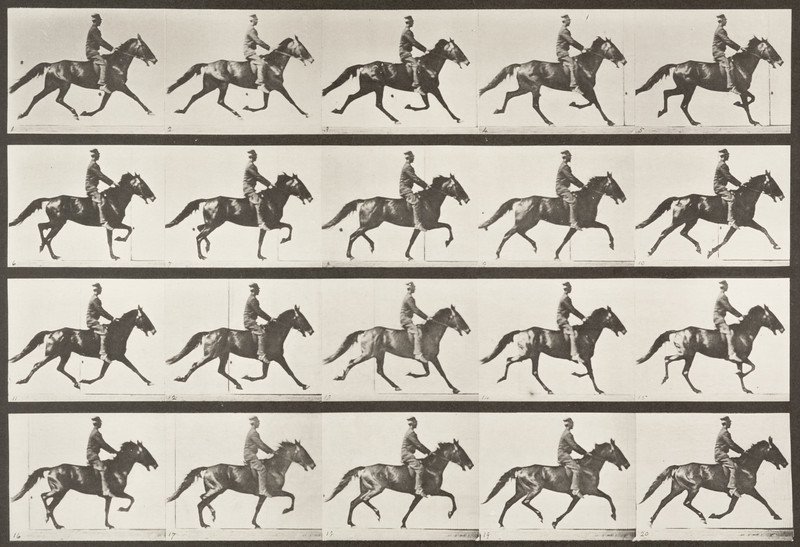 Horse Pronto pacing, saddled with rider (Animal Locomotion, 1887, plate 591)
