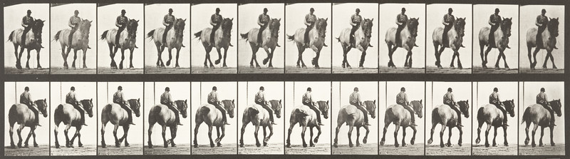 Horse Dusel with bareback rider (Animal Locomotion, 1887, plate 578)