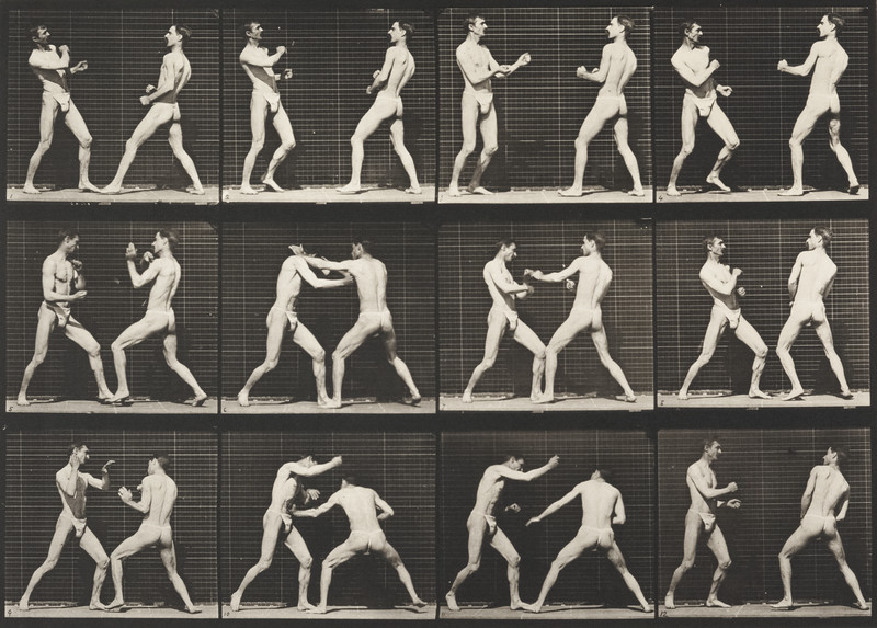 Two men in pelvis clothes boxing (Animal Locomotion, 1887, plate 338)