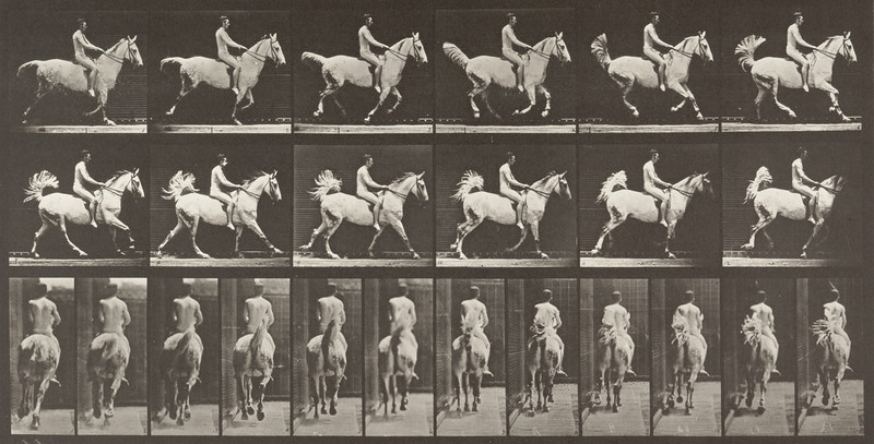 Horse Smith cantering, saddled with nude rider (Animal Locomotion, 1887, plate 622)