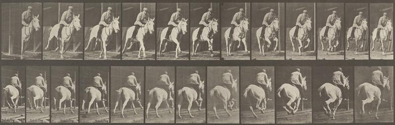 Horse Pandora galloping, saddled with rider (Animal Locomotion, 1887, plate 635)