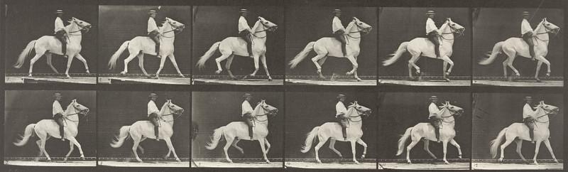 Horse Clinton ambling with bareback rider (Animal Locomotion, 1887, plate 589)