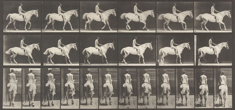 Horse Smith walking with saddle nude rider (Animal Locomotion, 1887, plate 582)
