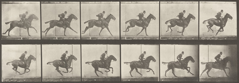 Horse Daisy galloping, saddled with rider (Animal Locomotion, 1887, plate 624)