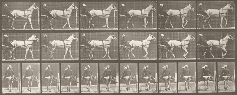 Horse Katydid walking, harnessed to sulky with driver (Animal Locomotion, 1887, plate 585)