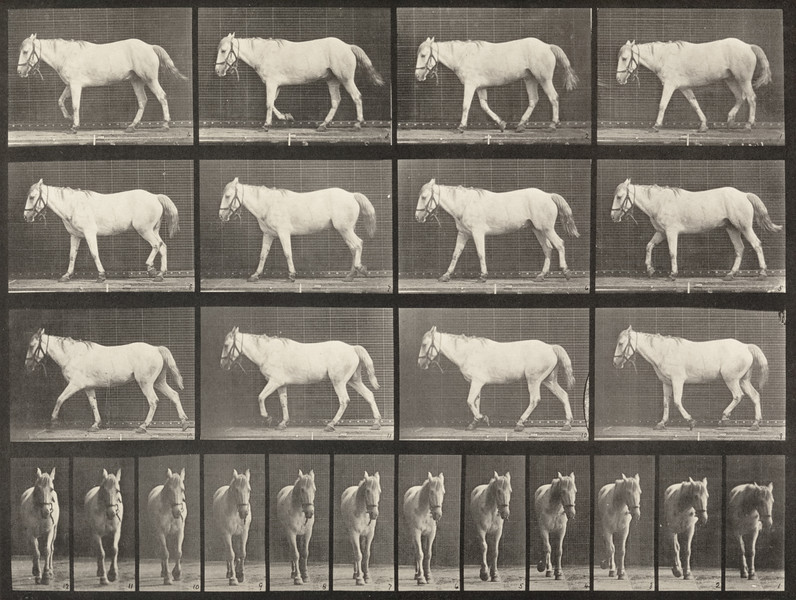 Horse Bob walking, free, ossification of cartilage, right front foot (Animal Locomotion, 1887, plate 656)