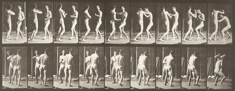 Two men in pelvis clothes boxing (Animal Locomotion, 1887, plate 339)