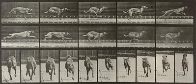 Dog Ike galloping (Animal Locomotion, 1887, plate 708)