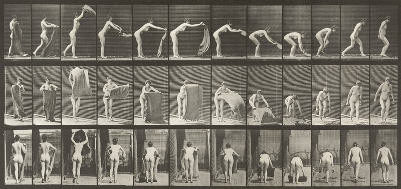 Nude woman spreading a rug on the floor (Animal Locomotion, 1887, plate 439)