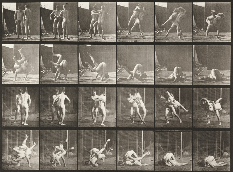 Nude men wrestling, Graeco-Roman (Animal Locomotion, 1887, plate 348)
