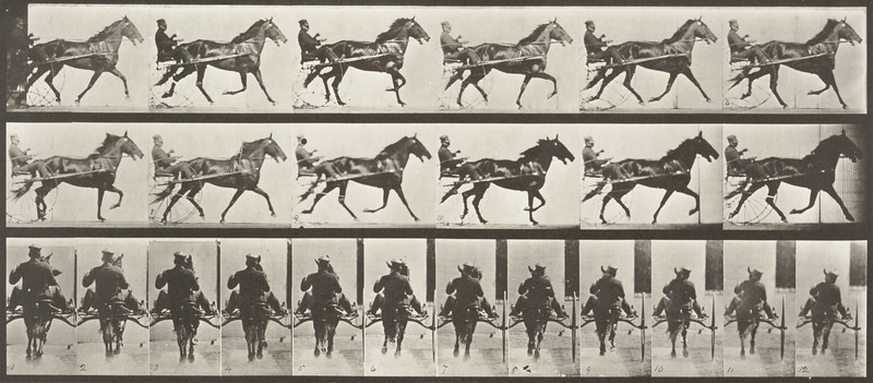 Horse Pronto pacing, harnessed to sulky with rider (Animal Locomotion, 1887, plate 594)