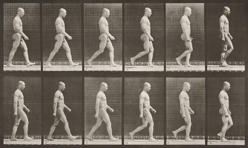 Nude man walking (Animal Locomotion, 1887, plate 6)