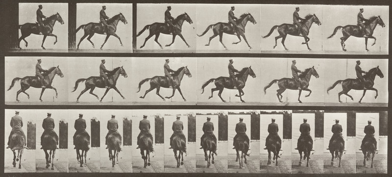 Horse Beauty trotting saddled with rider (Animal Locomotion, 1887, plate 601)