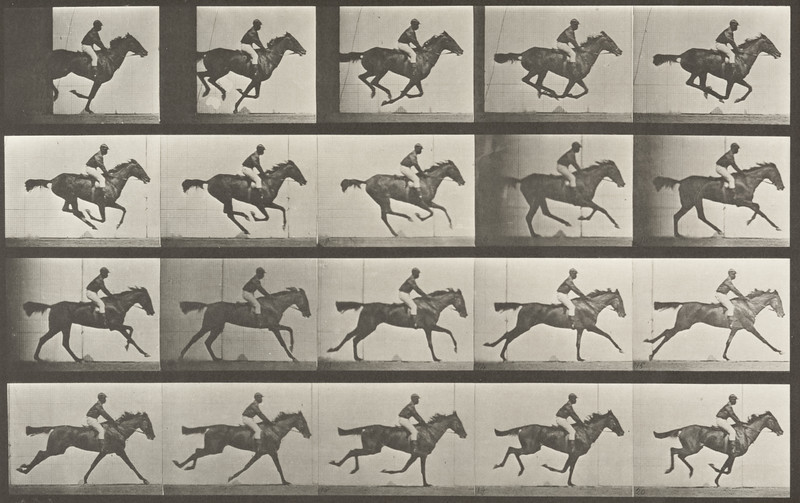 Horse Annie G. galloping with rider (Animal Locomotion, 1887, plate 627)