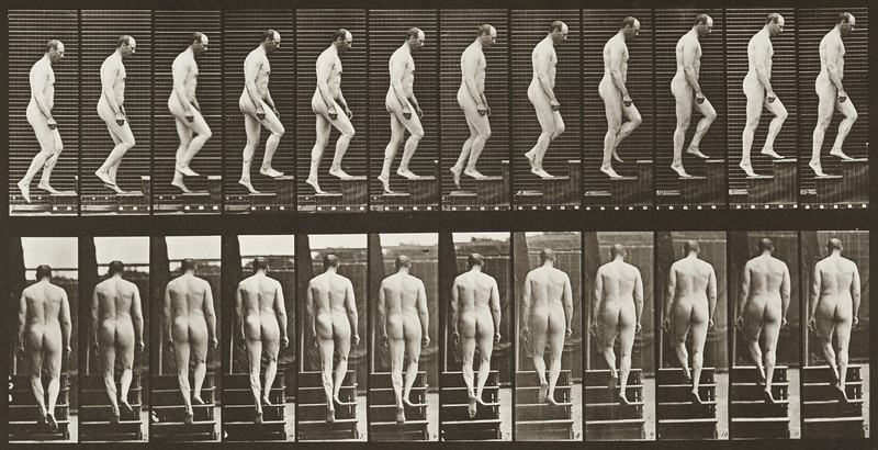 Nude man ascending stairs (Animal Locomotion, 1887, plate 89)