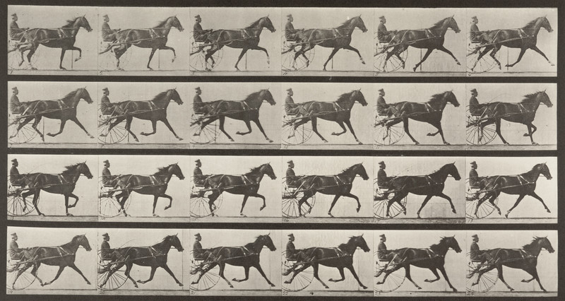 Horse Flode Holden trotting, harnessed to sulky with driver (Animal Locomotion, 1887, plate 608)