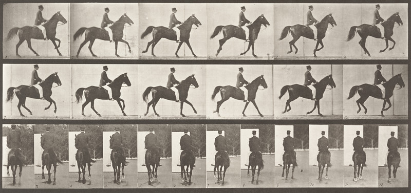 Horse Middleton cantering, saddled with rider (Animal Locomotion, 1887, plate 619)