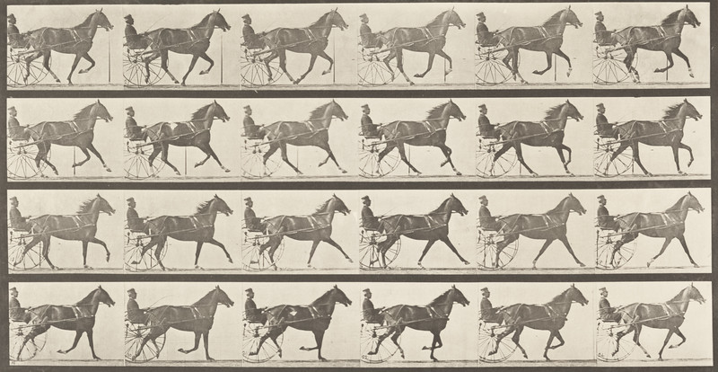 Horse Flode Holden trotting, harnessed to sulky with driver and breaking into a gallop (Animal Locomotion, 1887, plate 614)