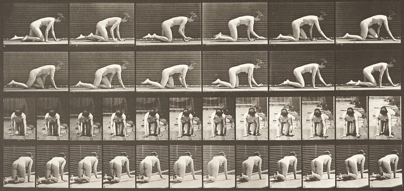 Nude woman crawling (Animal Locomotion, 1887, plate 182)