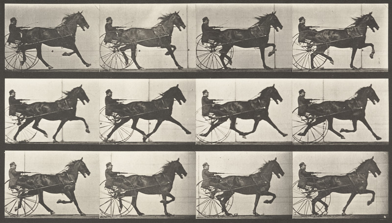 Horse Reuben trotting, harnessed to sulky with driver (Animal Locomotion, 1887, plate 606)