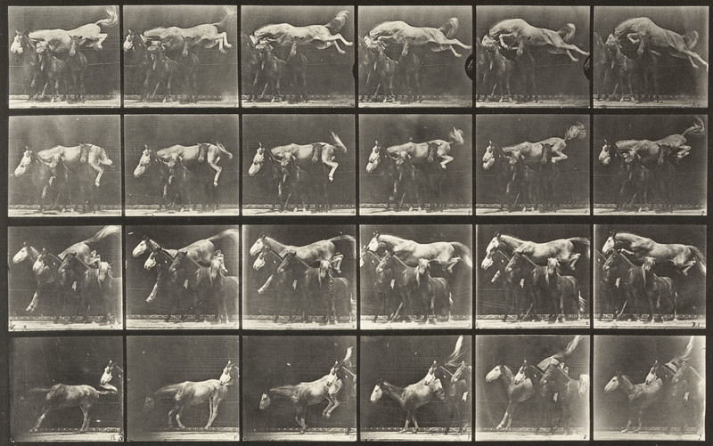 Horse Hornet jumping over three horses (Animal Locomotion, 1887, plate 648)