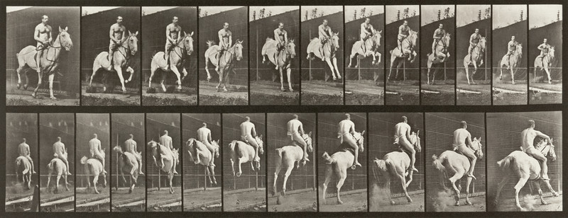 Horse Pandora jumping a hurdle, saddled with nude rider (Animal Locomotion, 1887, plate 646)