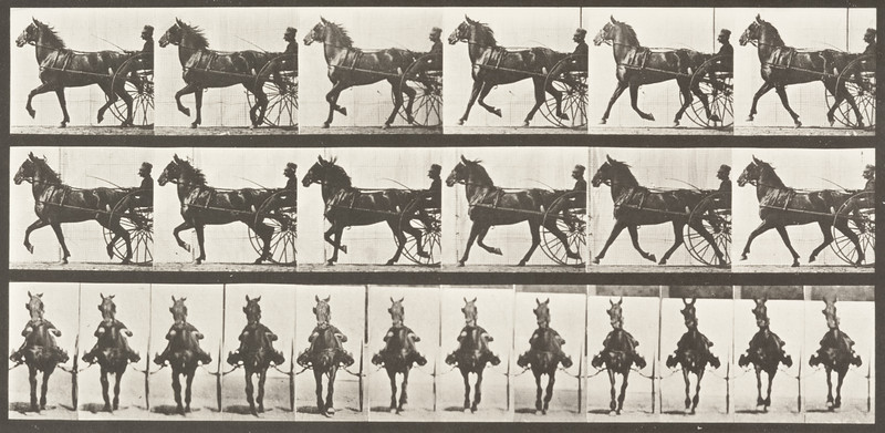 Horse Dercum trotting, harnessed to sulky with driver (Animal Locomotion, 1887, plate 612)