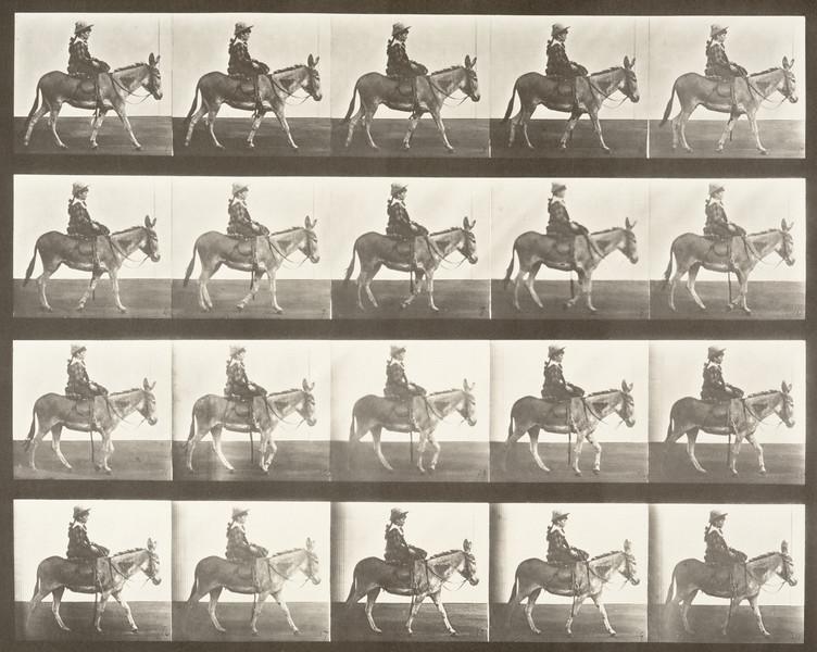Horse Zoo walking, saddled with rider (Animal Locomotion, 1887, plate 666)