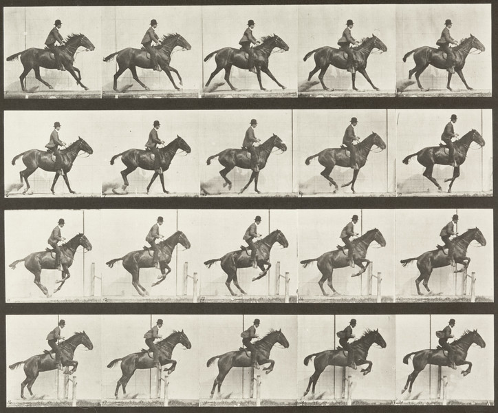 Horse Daisy jumping hurdle, saddled with rider, preparing for the leap (Animal Locomotion, 1887, plate 636)
