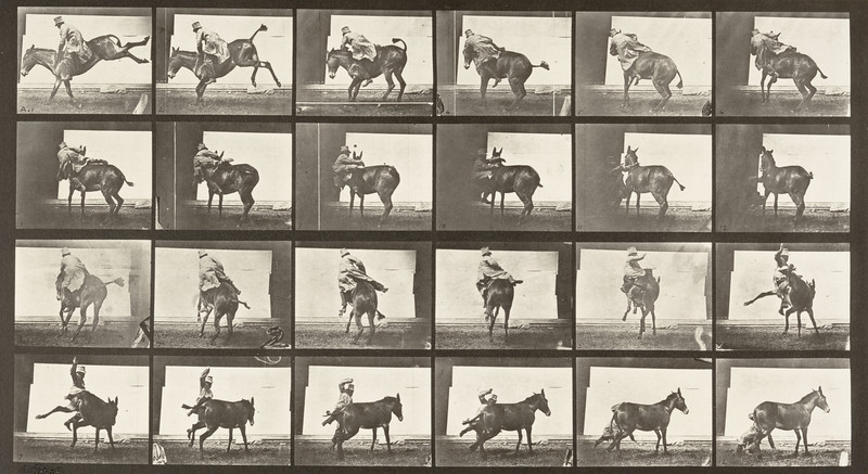 Horse Ruth, refractory with rider (Animal Locomotion, 1887, plate 661)