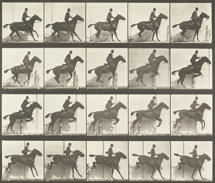 Horse Daisy jumping a hurdle, saddled with a rider (Animal Locomotion, 1887, plate 638)