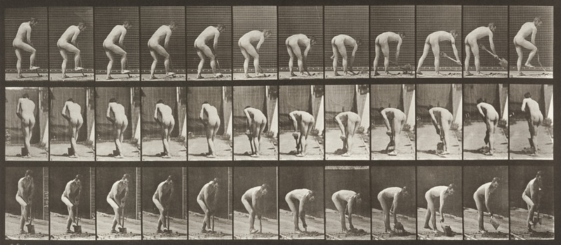 Nude farmer using a spade (Animal Locomotion, 1887, plate 388)