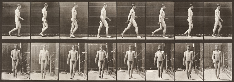 Nude man walking (Animal Locomotion, 1887, plate 5)