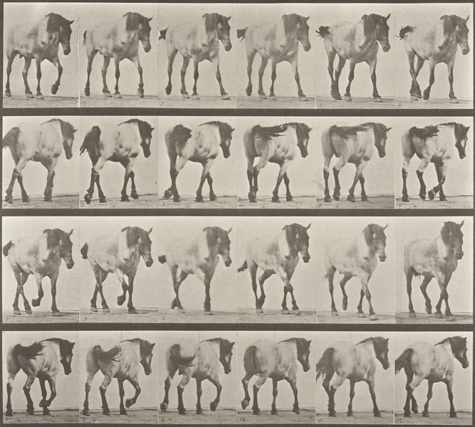 Horse Hansel walking, free (Animal Locomotion, 1887, plate 575)